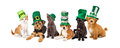 St Patricks Day Puppies And Kittens Royalty Free Stock Photos - 51347838