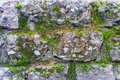 Old Brick Wall Texture With Moss Royalty Free Stock Image - 51384116
