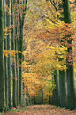 Forest Pathway In The Autumn Stock Image - 51405341
