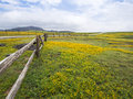 Spring Time Flower - Back Roads Of Rural America Royalty Free Stock Photography - 51422997
