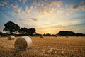 Rural Landscape Image Of Summer Sunset Over Field Of Hay Bales Stock Images - 51432254