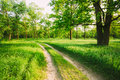 Road, Path, Way, Lane In Summer Green Forest Stock Photography - 51451442