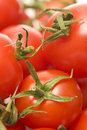 Tomatoes Royalty Free Stock Image - 5159426