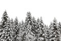 Snow Covered Pine Tree Royalty Free Stock Image - 51505896