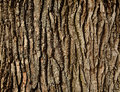 Tree Bark Royalty Free Stock Photography - 51507257
