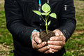 Man Hands Holding A Green Young Plant. Symbol Of Spring And Ecol Royalty Free Stock Image - 51512626