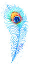Vector Watercolor Peacock Feather Stock Image - 51520441