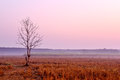 Lonely Dying Tree At Dawn Royalty Free Stock Photos - 51544548