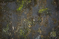Texture Of Black Grunge Concrete And Green Moss. Royalty Free Stock Image - 51546186