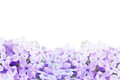 Macro Image Of Lilac Violet Flowers Stock Photo - 51598000