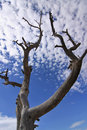 Tree Silhouette On Blue Sky Background Stock Photography - 5166412