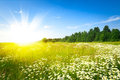 Sunrise On Summer Green Field Royalty Free Stock Photography - 51618337