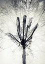 Male Hand Silhouette Over Sky And Leafless Tree Pattern Stock Photo - 51657850