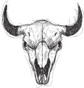 Cow Skull Sketch Royalty Free Stock Image - 51695216