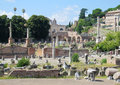 Ancient Roman Forum Ruins In Rome Stock Image - 51726091