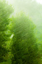 Rainy Outside Window Green Background Texture. Stock Photography - 51726632