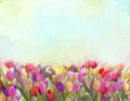 Oil Painting Tulips  Flowers In The Meadows Stock Image - 51735531