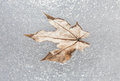 Leaf Frozen In Ice Stock Image - 51735701