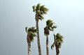Palm Tree Royalty Free Stock Images - 51760749