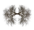Tree Lungs Stock Images - 51762064