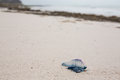 Dead And Poisonous Bluebottle Lying On The Beach Sand Stock Photos - 51789803