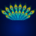 Vector Peacock Feathers On Blue Background. Stock Photos - 51804573