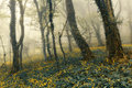 Mysterious Forest In Fog With Green Leaves And Yellow Flowers Royalty Free Stock Image - 51808096