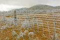 Texas Desert In A Winter Ice Storm Stock Images - 51812304