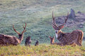 Spotted Deers In Forest Stock Photos - 51852653