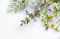 Medicinal Herbal Flowers Stock Photography - 51864702
