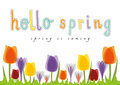 Hello Spring Tulip, Spring Is Coming Royalty Free Stock Images - 51875149