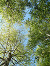 Spring Leafs On The Sky Royalty Free Stock Image - 5192166