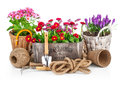 Spring Flowers In Wooden Bucket With Garden Tools Royalty Free Stock Images - 51937879