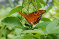 Tropical Butterfly Stock Images - 529044