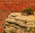 Lonely Tree At Grand Canyon Stock Photography - 5208572