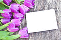Violet Tulips On The Oak Brown Table With White Sheet Of Paper Stock Images - 52019064