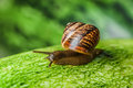 Snail Royalty Free Stock Images - 52040539
