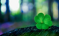 Shamrock In Forest Stock Photography - 52048372