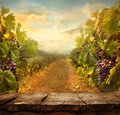 Vineyard Design Royalty Free Stock Photo - 52050685