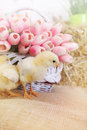 Bouquet Of Tulips And Chickens Stock Image - 52072071