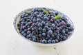 Blueberries Royalty Free Stock Photography - 52085377