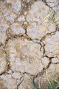 Dried Lawn Stock Image - 5227511