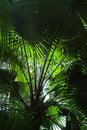 Under A Palm Tree Royalty Free Stock Photo - 5229325