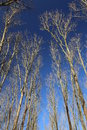 Bare Trees Under Dark Blue Sky Stock Photos - 52213473