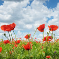 Poppies And Blue Sky Stock Photography - 52220632