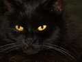 Black Cat With Two  Yellow Eyes Royalty Free Stock Images - 52235129
