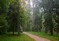 Early Autumn Forest After Rain With Mist Royalty Free Stock Photo - 52242385