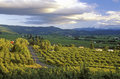 Vista Of Hood River Valley With Mt. Hood, OR Royalty Free Stock Photo - 52267385