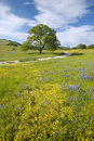 Lone Tree And Colorful Bouquet Of Spring Flowers Blossoming Off Route 58 On Shell Creek Road, West Of Bakersfield In CA Royalty Free Stock Photography - 52298867