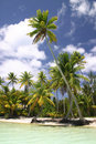 Bora Bora Beach Royalty Free Stock Photo - 5233125